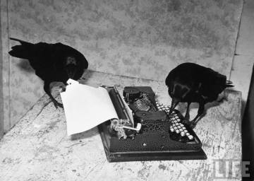 Peter Stackpole ~ A raven typing his own name of on the typewriter, 1939